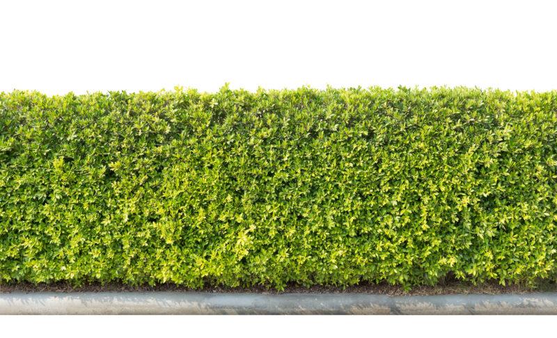 Jardim vertical e teto verde no isolamento térmico